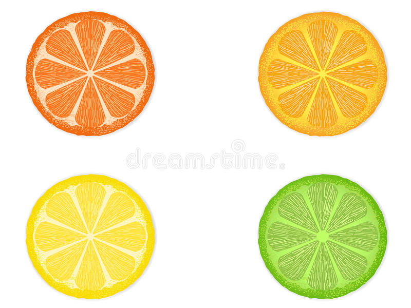 Download Citrus fruit slices stock vector. Illustration of heat - 25540617