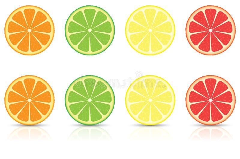 Citrus Fruit Slices stock photography