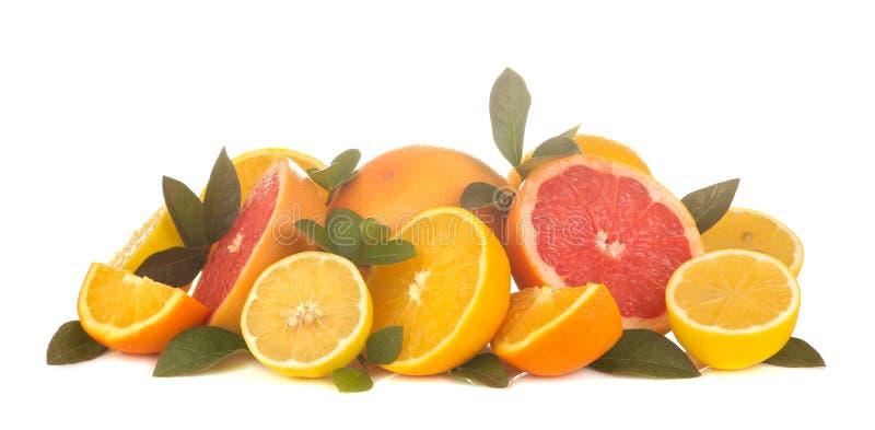 Citrus fruit. various citrus fruits with leaves of lemon, orange , grapefruit on a white isolated background royalty free stock images