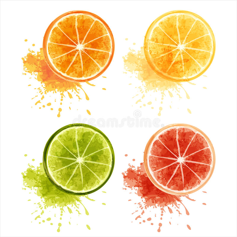 Citrus fruits. Set of ripe citrus fruits - orange, lemon, lime, grapefruit. EPS10 stock illustration