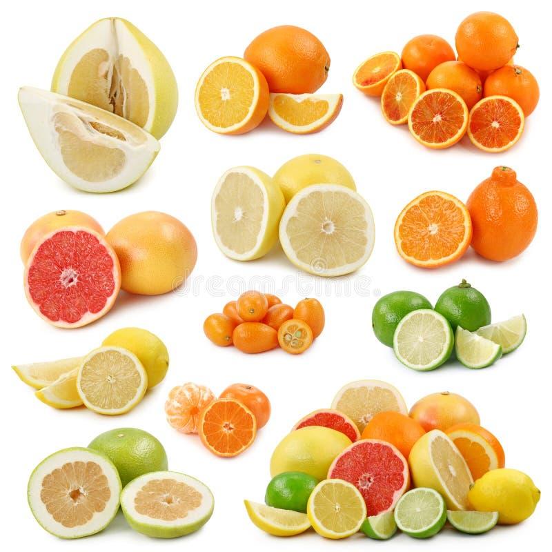 Download Citrus fruits stock image. Image of green, citrus, part - 7797655