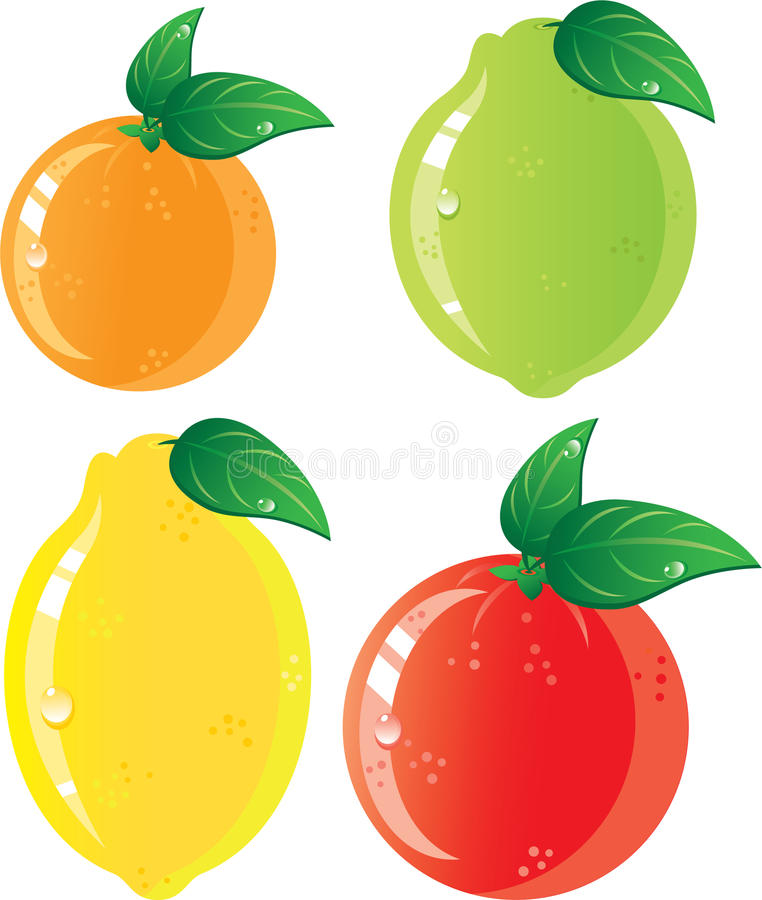 Citrus fruits icon set