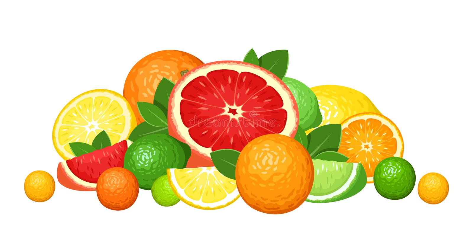 Citrus fruits. Illustration of various citrus fruits on a white background royalty free illustration