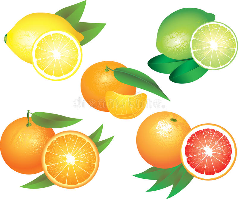 Citrus fruits photo-realistic set. Citrus fruits photo-realistic detailed set royalty free illustration