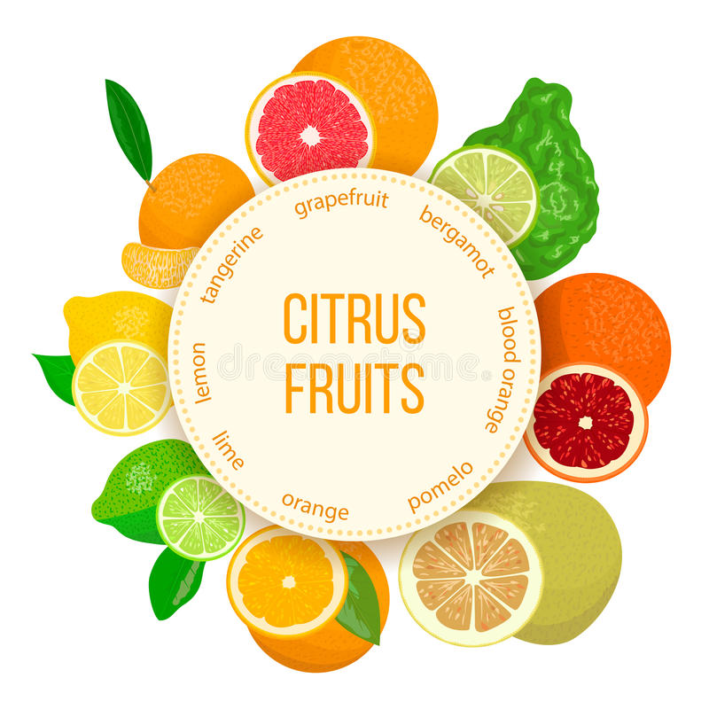 Citrus fruits set. Bergamot, lemon, grapefruit, lime, mandarin, pomelo, orange, blood orange with slices. Citrus fruits realistic set with round emblem. Bergamot royalty free illustration