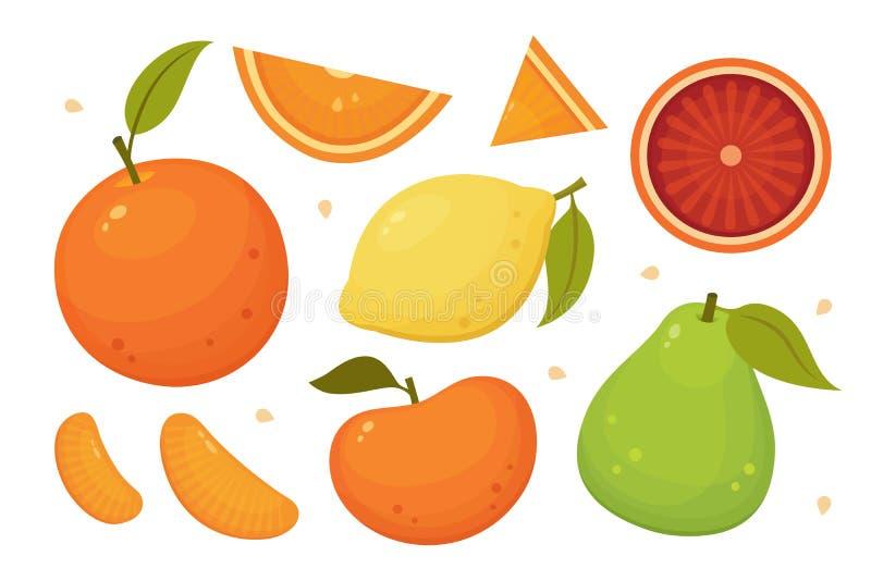 Citrus fruits slices, whole and halves. Orange, grapefruit, lemon, pomelo isolated vector icons. Tropical fruits set. Citrus fruits slices, whole and halves stock illustration