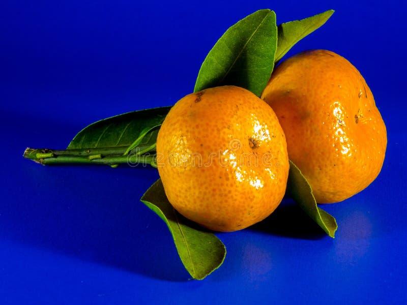 Citrus frukt, Clementine, tangerin arkivfoto