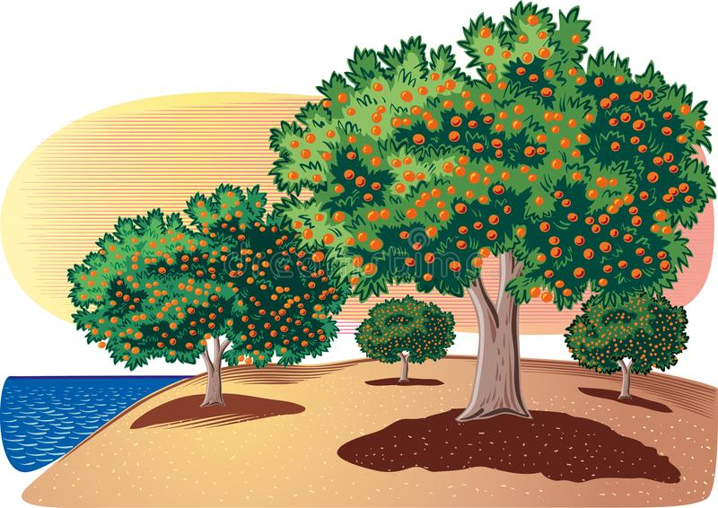 Citrus grove by the sea. Citrus grove by the sea, on the Meditterranean landscape royalty free illustration