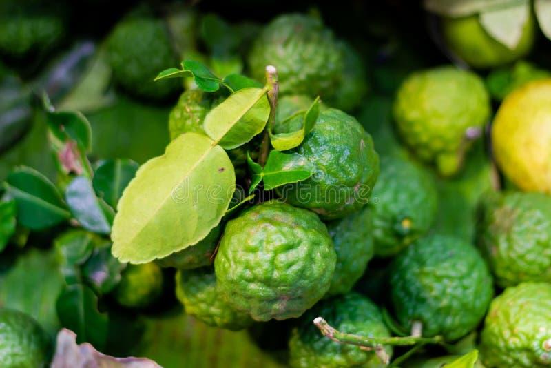 Citrus hystrix som kallas kaffirlimefruktfrukten för växt- medicin frukten, är busen och gräsplan och mognar för att gulna royaltyfria foton
