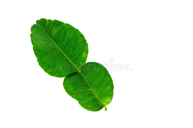 (Citrus hystrixDC plantera, bladformen och textur,) arkivfoton