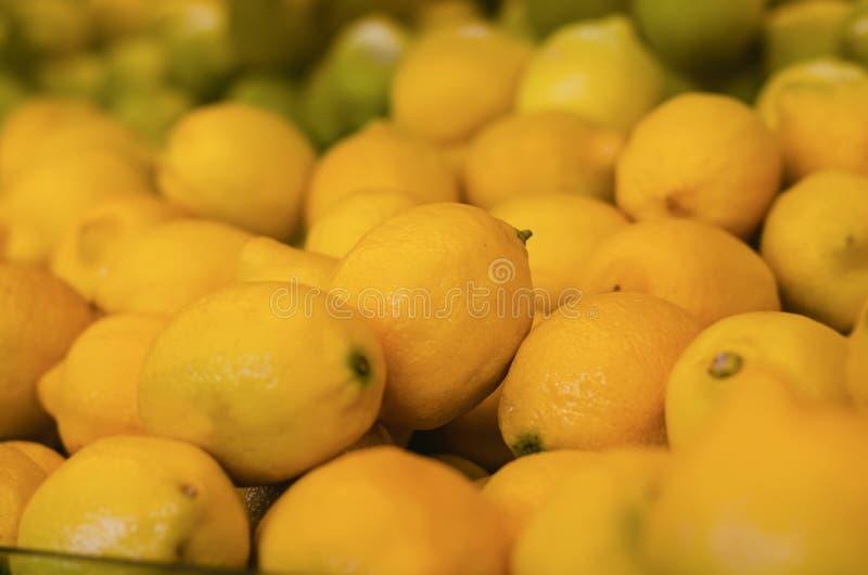Citrus Limon, der Zitronenbaum, ist ein kleiner beständiger Obstbaum stockbilder