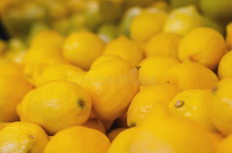 Citrus Limon, der Zitronenbaum, ist ein kleiner beständiger Obstbaum lizenzfreie stockbilder