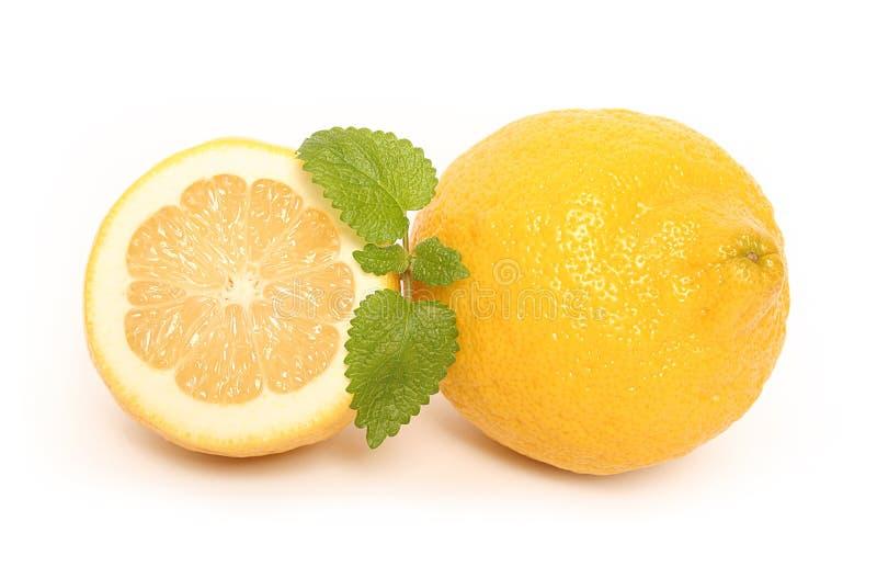 citrus mint royaltyfria bilder