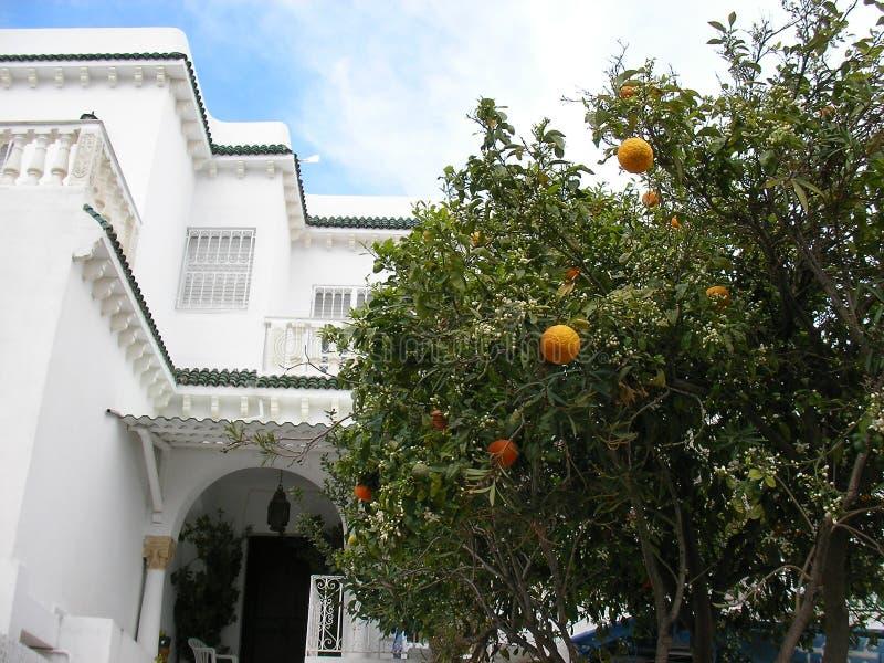 Citrus plants in Tunis, Tunisia. Citrus plants in Sidi Bou Said, Tunis, Tunisia royalty free stock photo