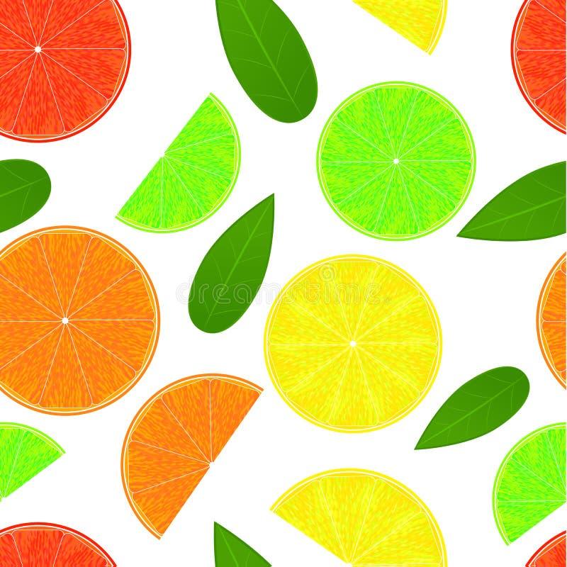 Citrus seamless pattern. Fresh eco fruit. royalty free illustration