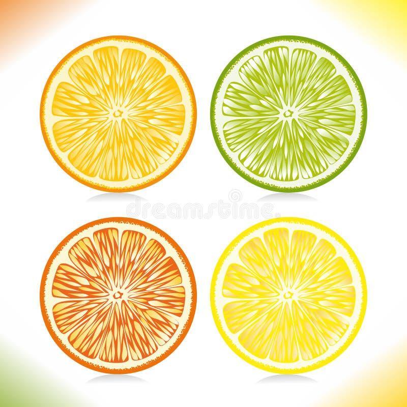 Download Citrus slices. stock vector. Illustration of citrus, green - 28842963