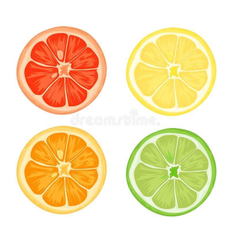 Citrus slices of lemon, orange, lime and grapefruit. Vector illustration on white background stock illustration
