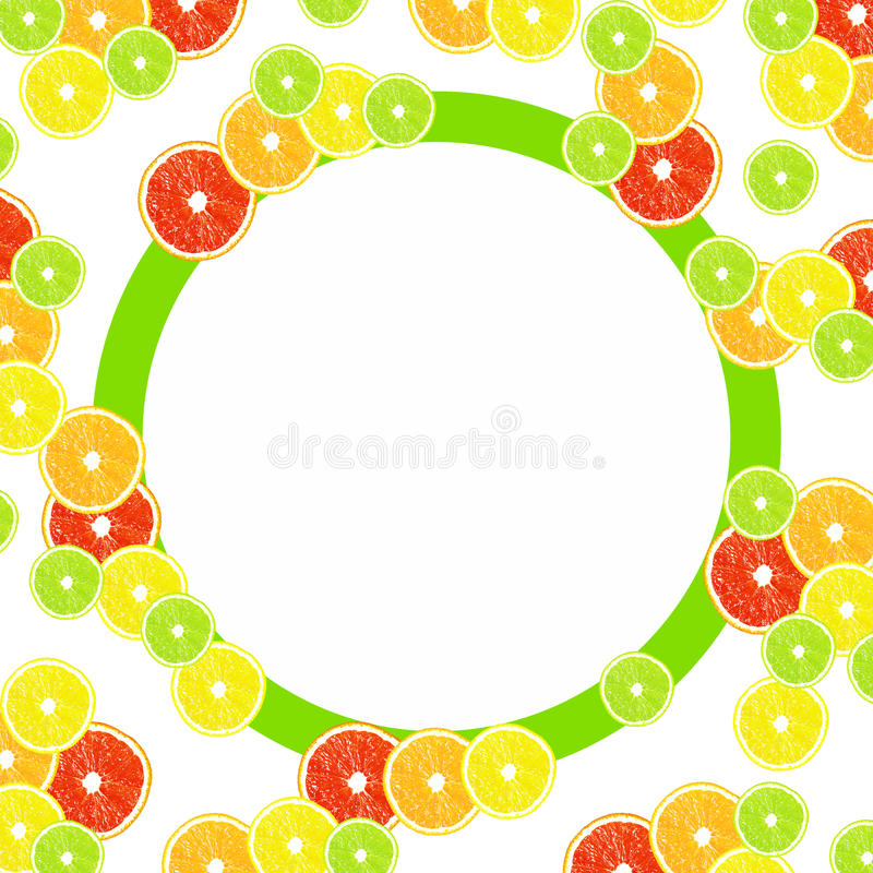 Citrus on a white background with frames vector illustration