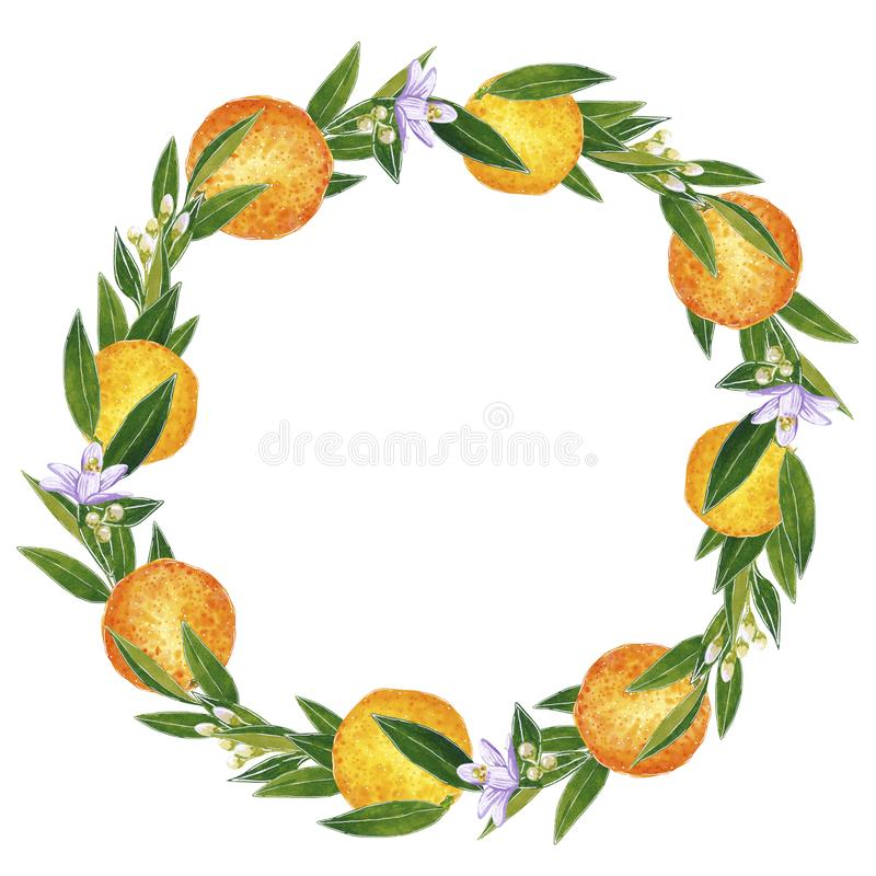 Citrus wreath made of oranges, flowers and leaves. Hand drawn watercolor illustration. Citrus wreath made of oranges, flowers and leaves, hand drawn botanical stock illustration