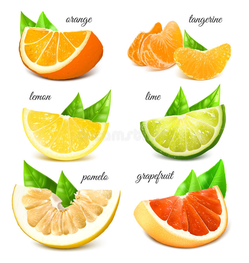 citrusa nya frukter royaltyfria bilder