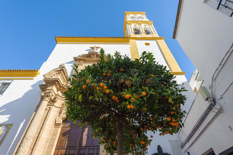 Citrusboom met sinaasappelen en kerk op een achtergrond Marbella, Spanje stock foto