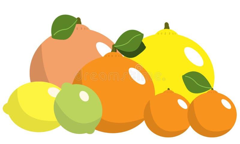 Citrusfrukter Royaltyfri Bild
