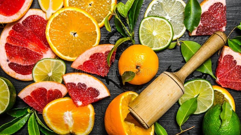 Citrusfrukter - grapefrukt, apelsin, tangerin, citron, limefrukt arkivbild