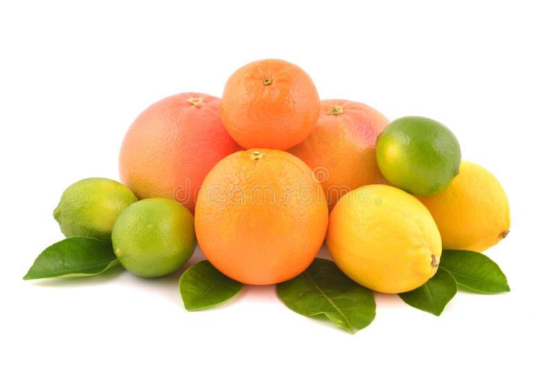 citrusfrukter isolerade white royaltyfria bilder