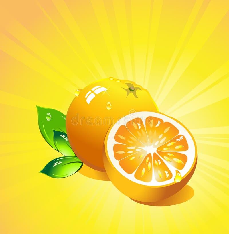 citrusfruktorangevektor stock illustrationer