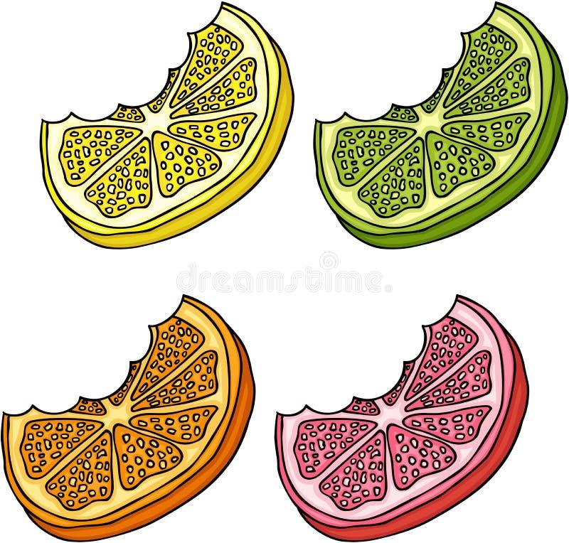 Citrusfruktskivor vektor illustrationer
