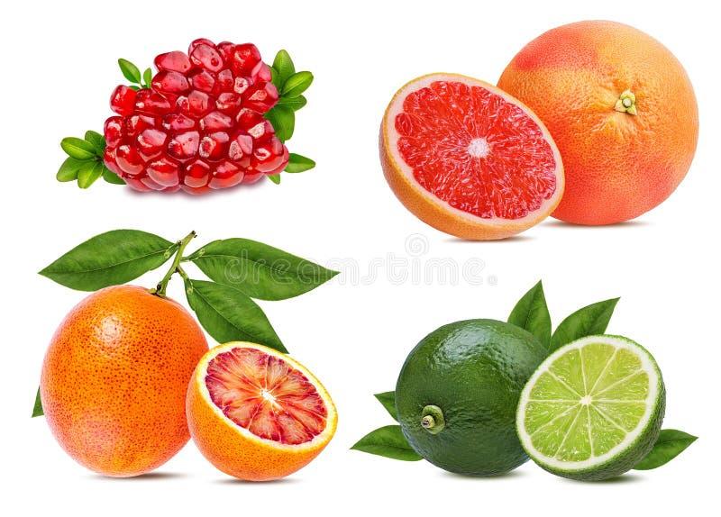 Citrusfruktuppsättningapelsin, grapefrukt, limefrukt, granatäpple som isoleras på vit arkivbilder