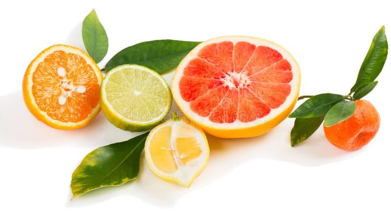 Citrusskivor och sidor royaltyfri foto