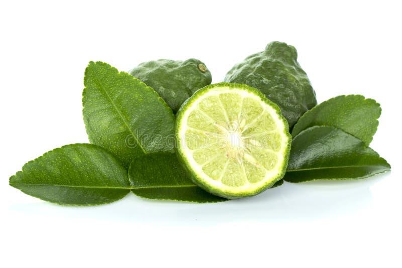 Citrust hystrix- och gräsplanblad royaltyfri bild