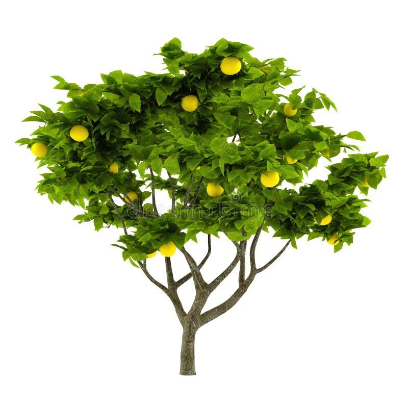 Citrust isolerat citronträd royaltyfri illustrationer