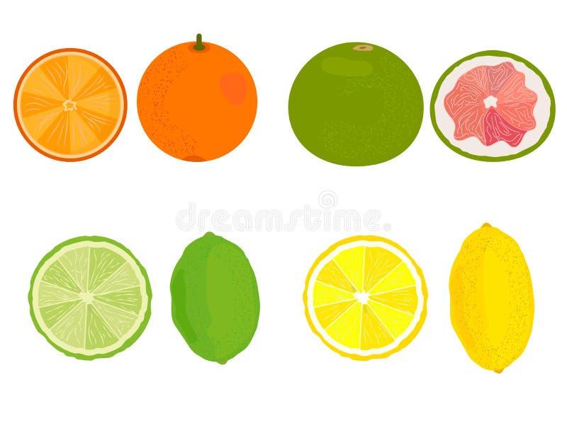citrusvrucht Citroen, sinaasappel, grapefruit, kalk Vector stock illustratie
