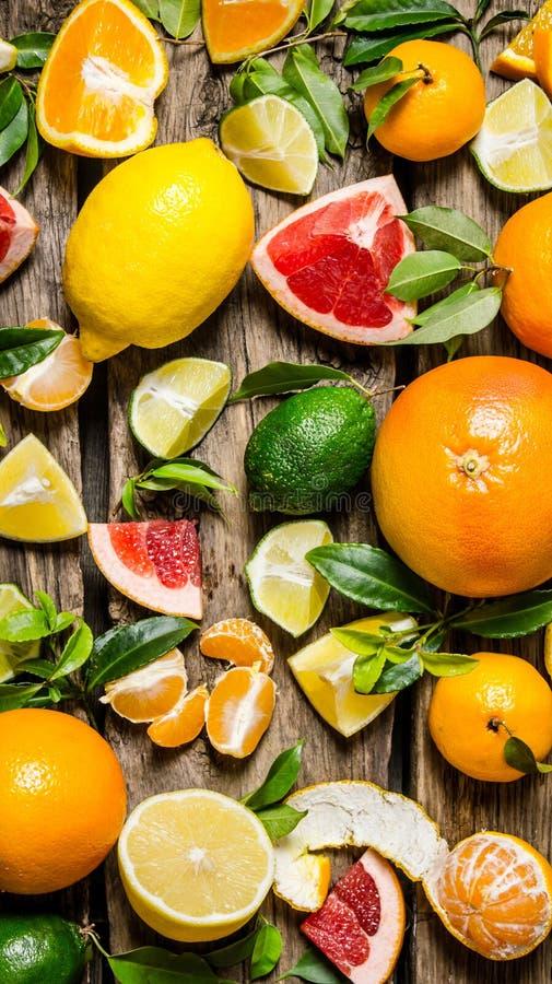 Citrusvruchten - gesneden grapefruit, sinaasappel, mandarijn, citroen, kalk en geheel met bladeren stock afbeeldingen