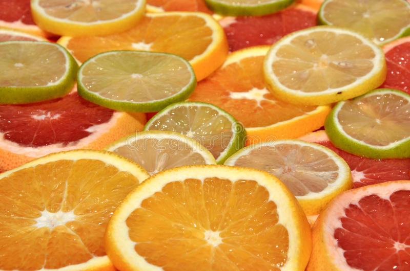 Citrusvruchtenplakken - panoramisch gezicht royalty-vrije stock afbeelding