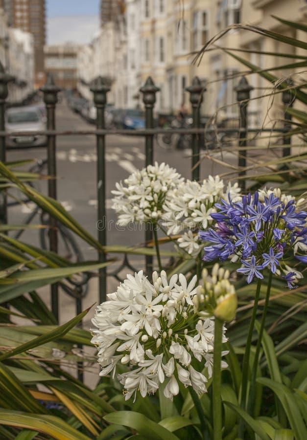 Città di Brighton - fiori fotografie stock libere da diritti