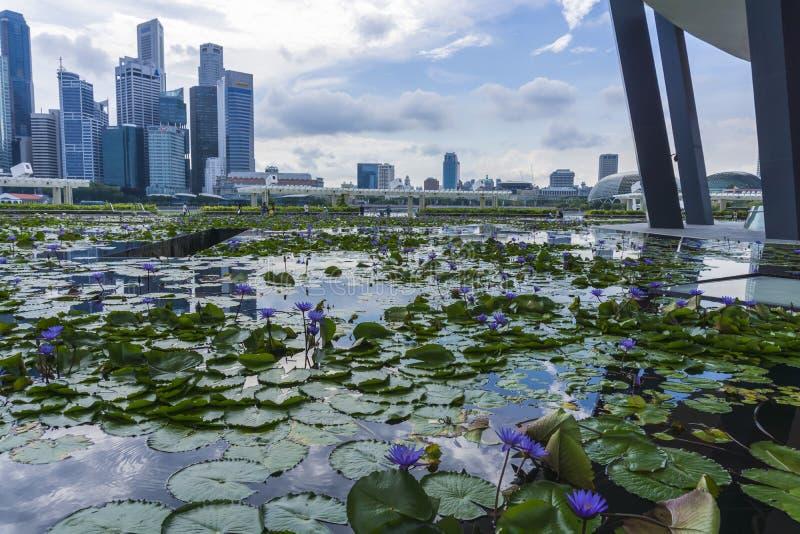 Città di Singapore durante il giorno immagine stock