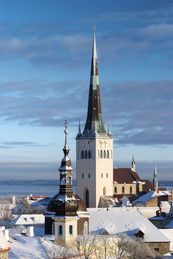Città di Tallinn. L'Estonia. Neve sugli alberi immagini stock libere da diritti