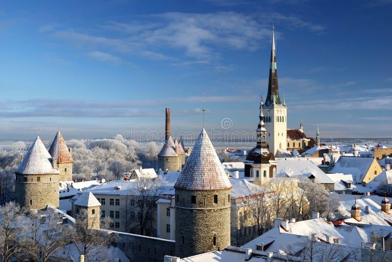 Città di Tallinn. L'Estonia. Neve sugli alberi in inverno immagine stock libera da diritti
