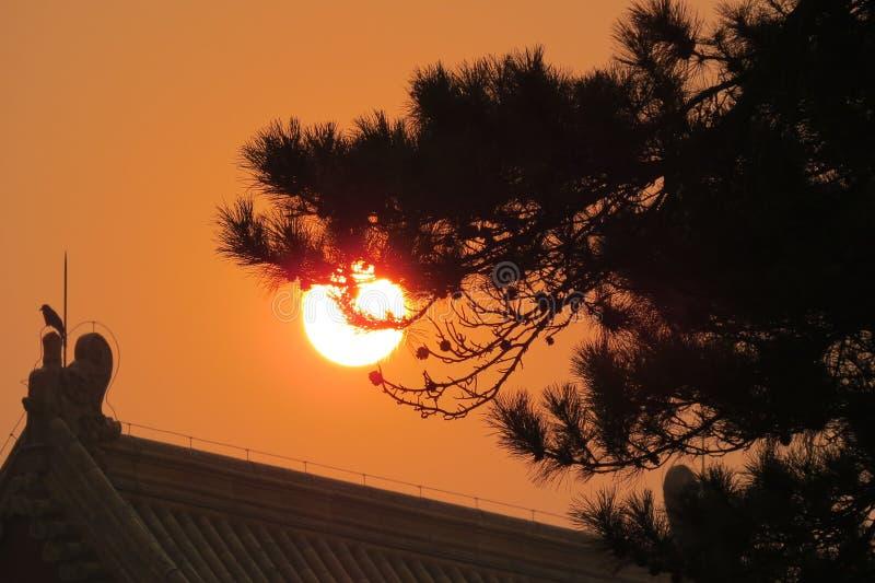 Città Pechino di Unforgetabble di tramonto dell'uccello fotografie stock