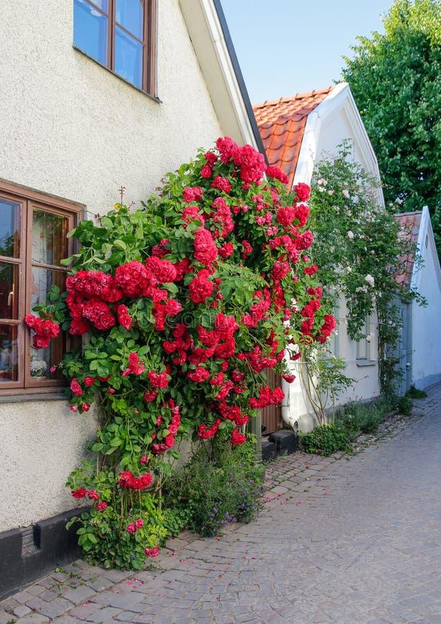 Città svedese Visby, famoso per le sue rose fotografia stock