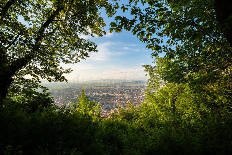 Città vista attraverso un'apertura degli alberi immagine stock
