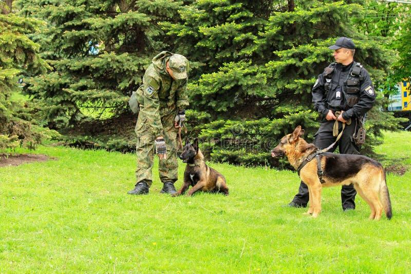 Citt? di Dnipro, Dniepropetovsk, Ucraina, il 9 maggio 2018 Gli operatori di cane poliziotto ucraini con i cani da pastore prepara immagine stock