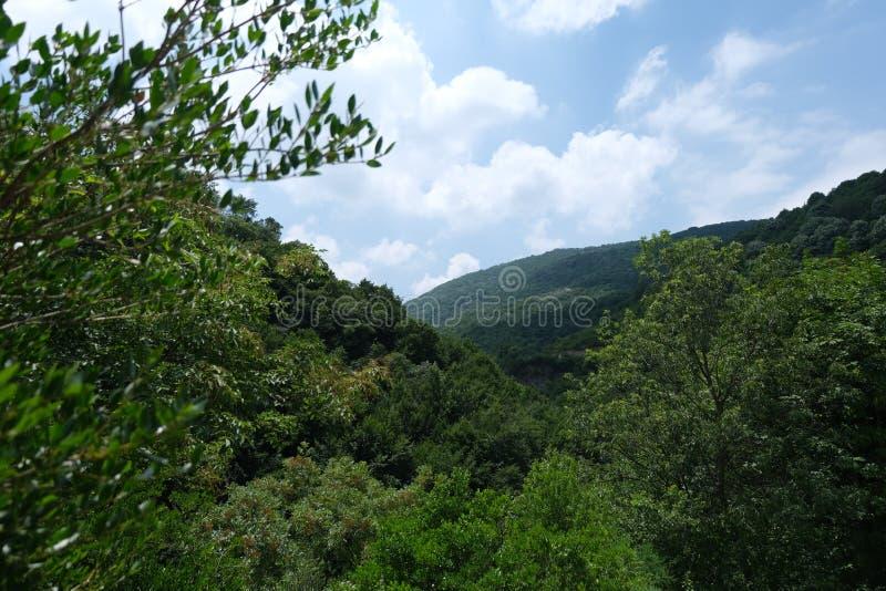 Citt? Forest Of Yalova - Turchia fotografie stock