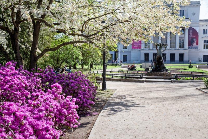 Citt? Repubblica di Riga, Lettonia Alberi e fontana di fioritura di opera Nella distanza, camminata della gente Giorno di sorgent fotografia stock libera da diritti