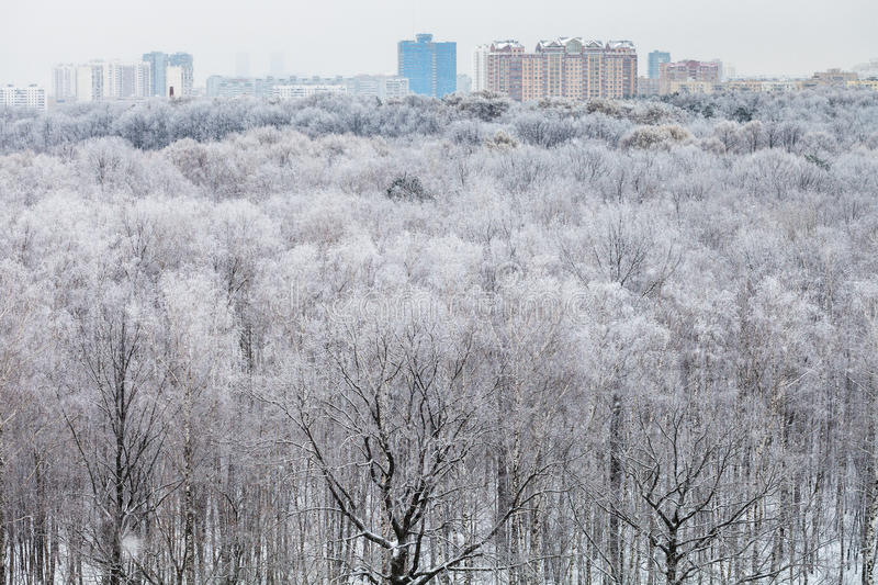 City and above view of forest covered by snow. City on horizon and above view of forest covered by snow in cold winter day royalty free stock photo
