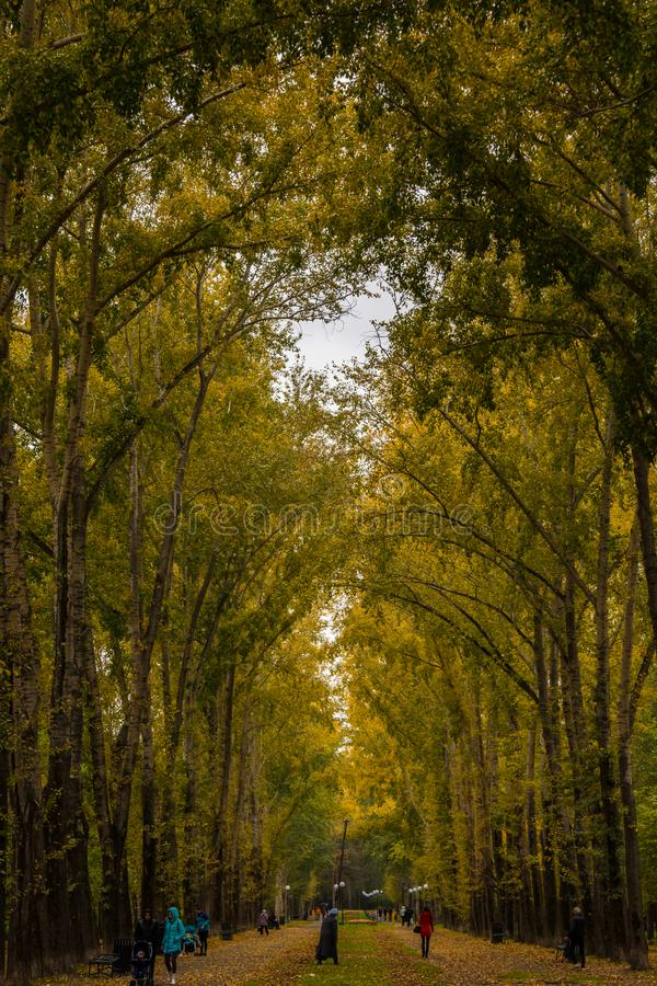 City alley with tall poplars and walking people. stock photos