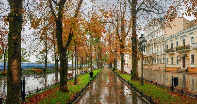 City boulevard in rainy autumn day. Prymorskyi bulvar, Odesa, Ukraine. City boulevard with old chestnuts in rainy autumn day. Prymorskyi bulvar, Odesa, Ukraine stock image